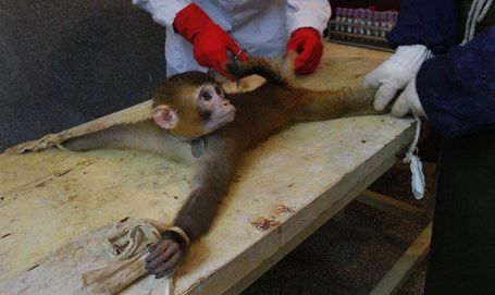 vivisection-monkey