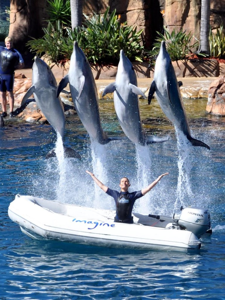 dolphins-leap-over-a-boat-at-the-finale-of-the-data