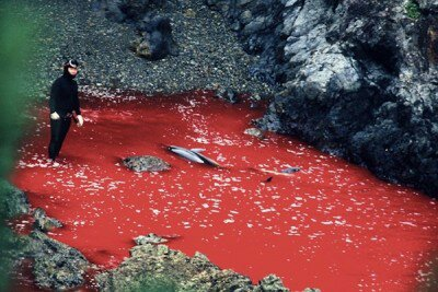 wpid-dolphin-slaughter-taiji-japan-the-cove-400x2671