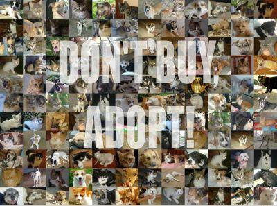 Dont_Buy____ADOPT_by_sasponi