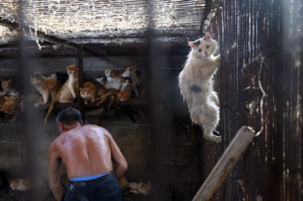 cats-at-yulin-dog-festival